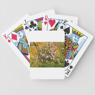Armeria maritima pink sea growing on a cliff bicycle playing cards