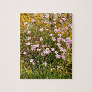 Armeria maritima pink sea growing on a cliff puzzle