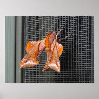 Armored Moth Print