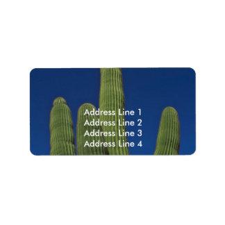 Arms Of A Saguaro