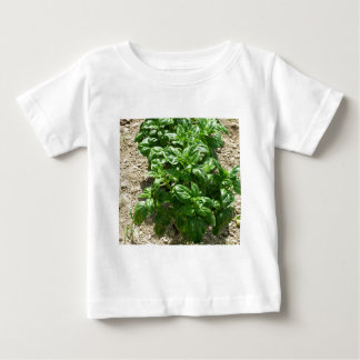 Array of basil plants baby T-Shirt