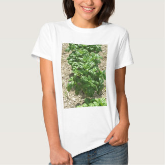 Array of basil plants t shirt