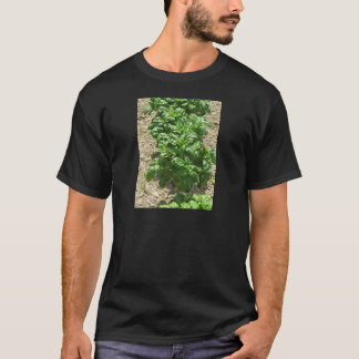 Array of basil plants T-Shirt