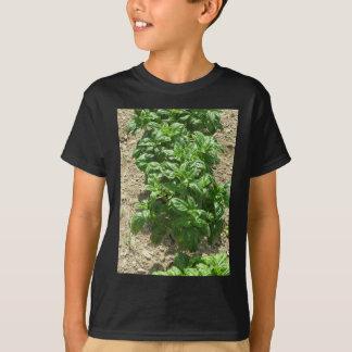 Array of basil plants tee shirt