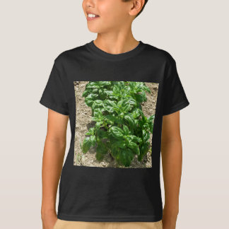 Array of basil plants tees