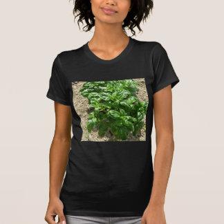 Array of basil plants shirt