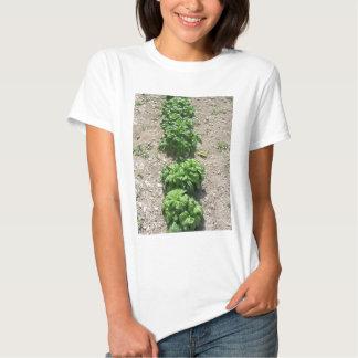 Array of basil varieties shirt