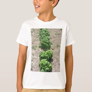 Array of basil varieties T-Shirt
