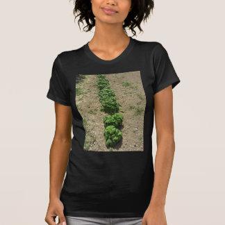Array of basil varieties T-Shirt