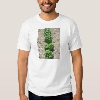 Array of basil varieties tee shirt