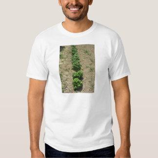 Array of basil varieties tshirt