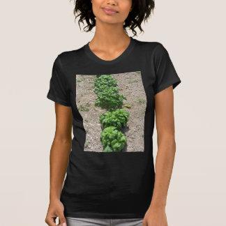 Array of basil varieties tee shirts