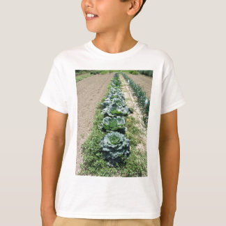 Arrays of cabbages and onions t shirt