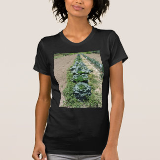 Arrays of cabbages and onions tees