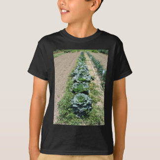Arrays of cabbages and onions tshirt