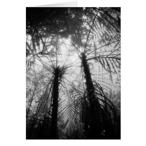 Art Card: Amazon Rainforest Black and White Palms