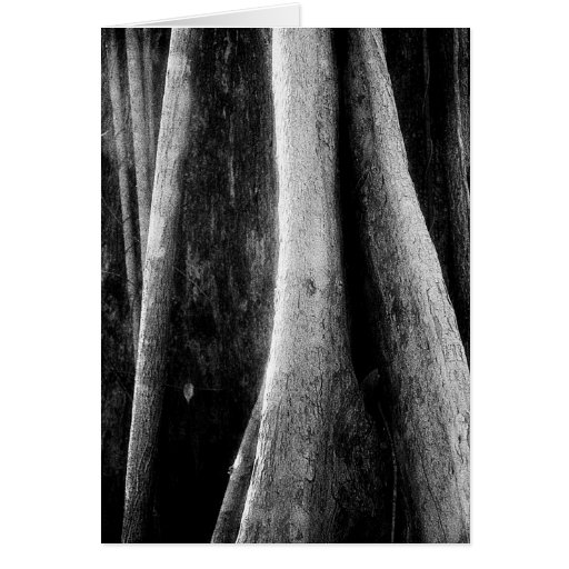 Art Card: Amazon Rainforest Black and White Roots