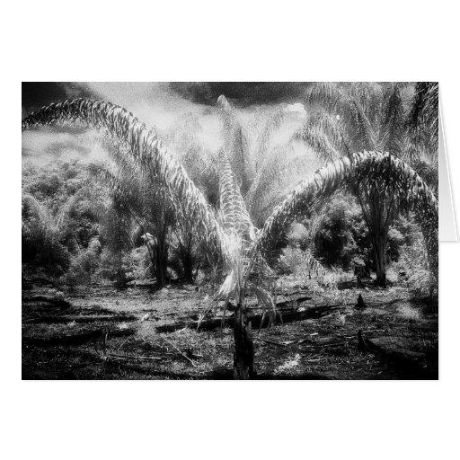 Art Card: Amazon Rainforest Black & White Jungle