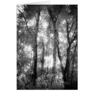 Art Card: Amazon Rainforest Black & White Jungle Greeting Card
