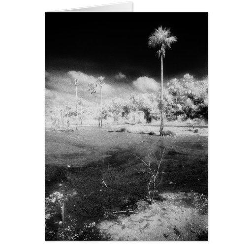 Art Card: Amazon Rainforest Black & White Pantanal