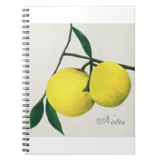 Art notebook Lemons
