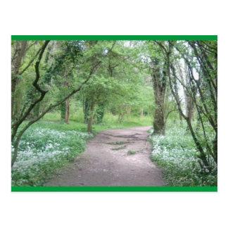 Art Postcard Woodland Path 1