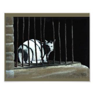 Art Print cat sitting behind old bars
