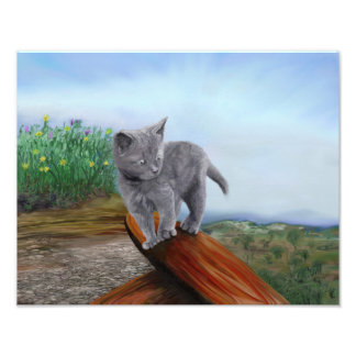 Art Print gray Kitten cute scaredy cat