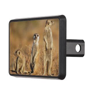 Art sauvage mignon animal de safari de Meerkat Couverture D'attelage De Remorque