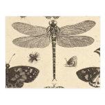 Art vintage de libellule (détail) carte postale