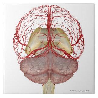 Arteries of the Brain 2 Tile