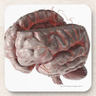 Arteries of the Brain 3 Coaster