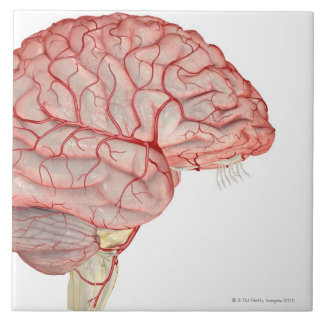 Arteries of the Brain Ceramic Tiles