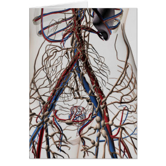 Arteries, Veins, And Lymphatic System 4 Card