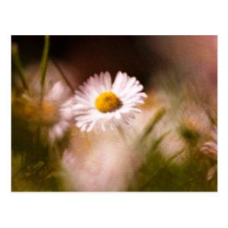 Artful English Daisy Postcard