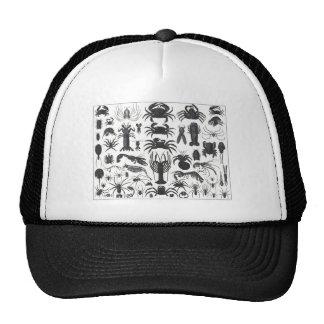 Arthropoda: spiders, crabs, lobsters B&W pattern Hat