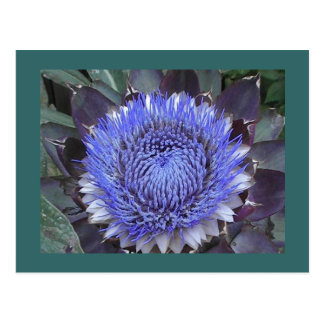 Artichoke Bloom Postcard