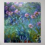 Artistic Agapanthus Fine Art Flowers Posters