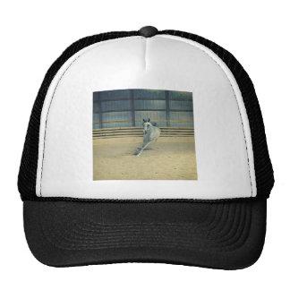 Artistic Arabian Trucker Hat