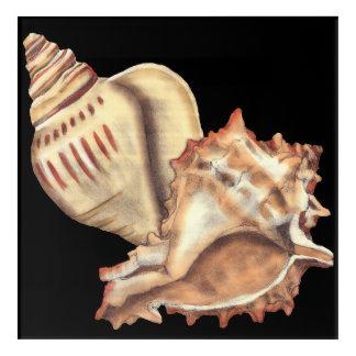 Artistic Conch Shells Acrylic Print