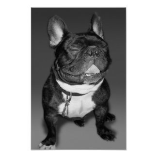 Artistic Photography of A French Bulldog Smile Poster