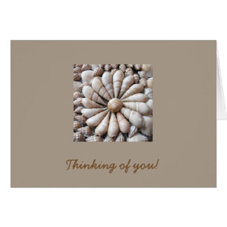 Artistic Seashell Circle Note Card