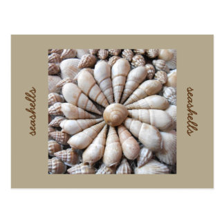 Artistic Seashell Circle Post Card