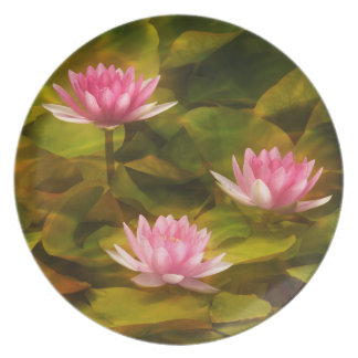 Artistic water lilies, California Plates