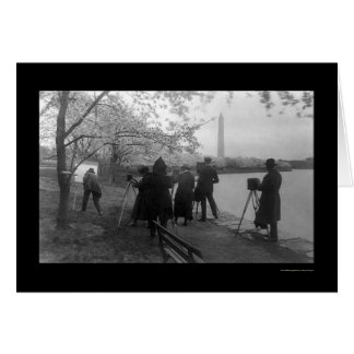 Artists and Cherry Trees in Washington, DC 1920 Card
