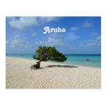 Aruba Divi Divi Tree Postcard