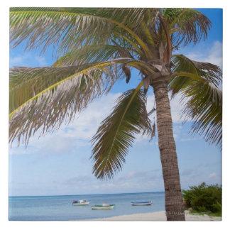 Aruba, palm tree on beach ceramic tiles