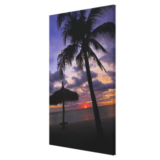 Aruba, silhouette of palm tree and palapa on canvas print