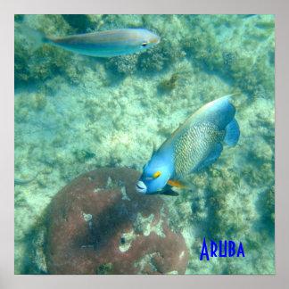 Aruba Underwater photo of Fish Poster