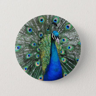 As Proud as a Peacock 2 Inch Round Button